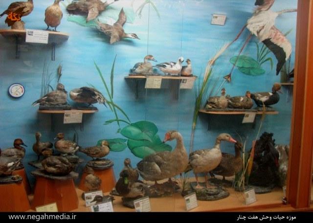 موزه حیات وحش هفت چنار تهران-اجاره خودرو-اجاره ماشین